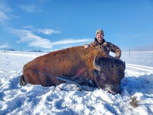 Brent-Adams-bison