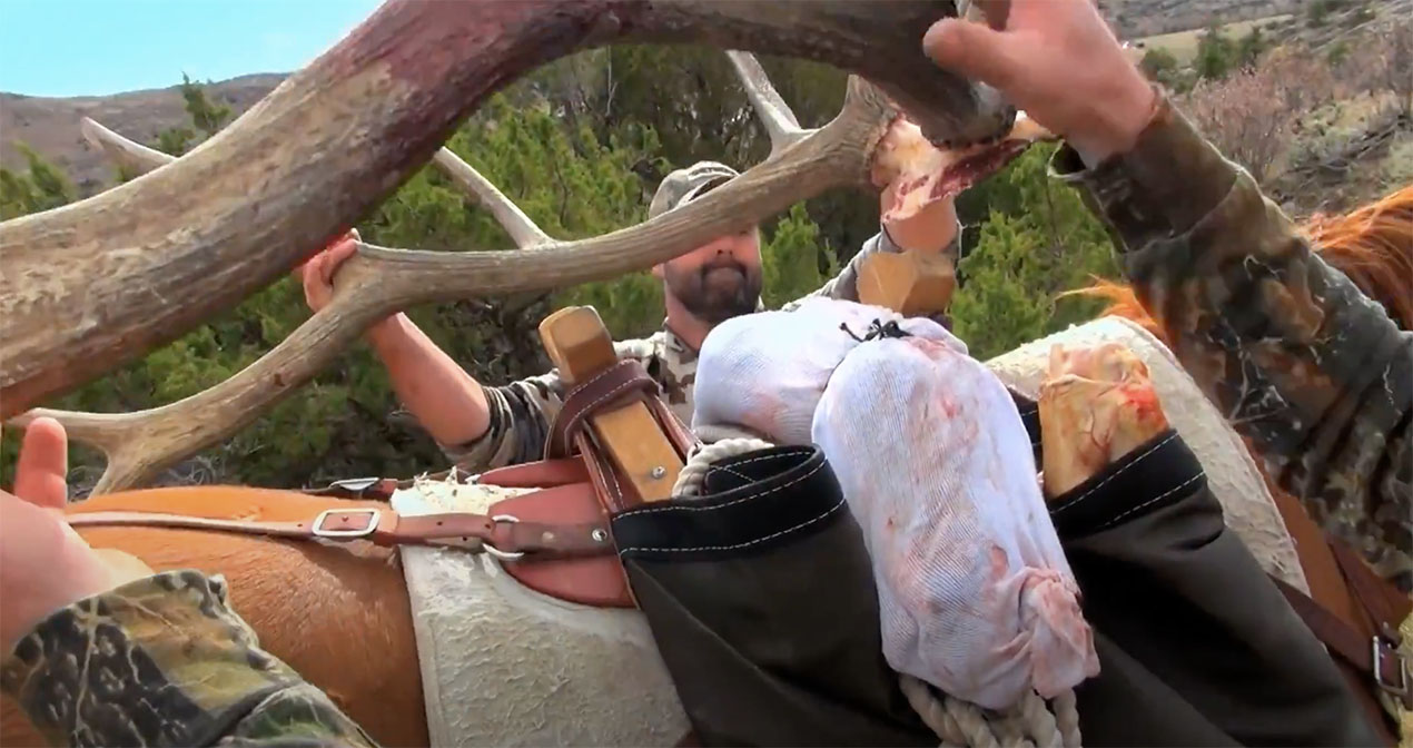 Caping an Elk in the Field