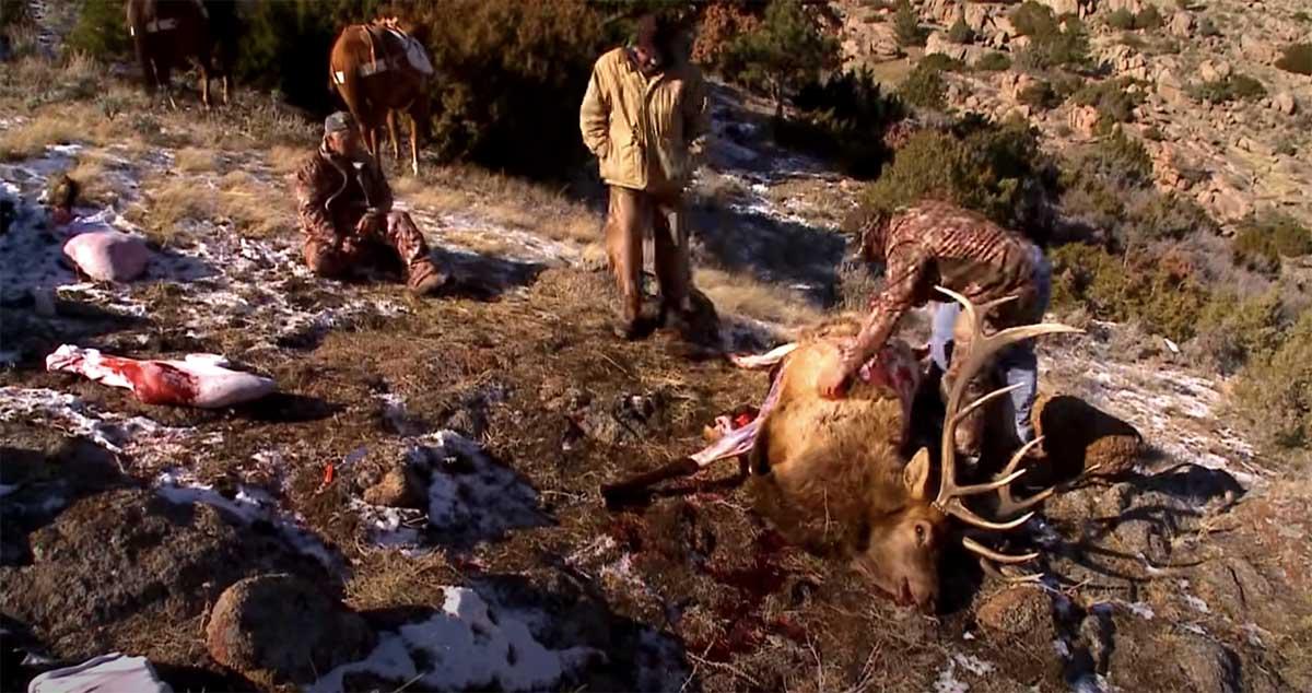 Gutless Field Prep Elk Timelapse